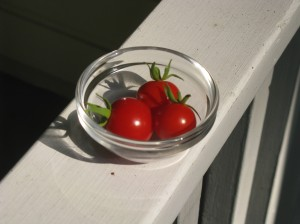 These beautiful red Cherry Tomatoes came from a truly scrawny plant.